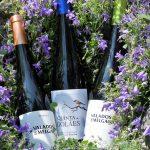 vína z regionu Vinho Verde